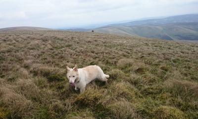 zak on the hills