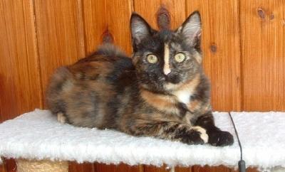 Semi feral kitten