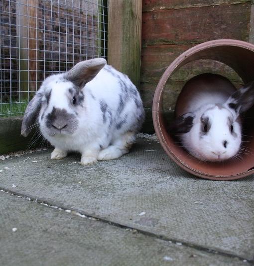 thumper & molly