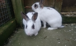 Daisy & Poppy