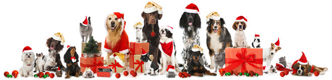 christmas-pets-many-isolated-white-45801081