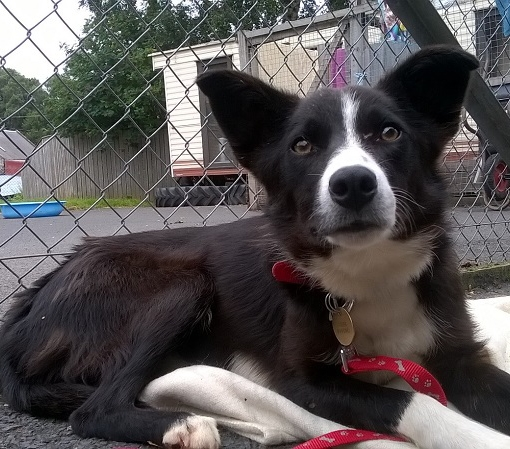 New dog listed for rescue at the Borders Pet Rescue - Jill
