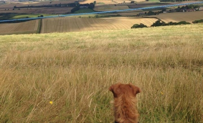 milo in the hills