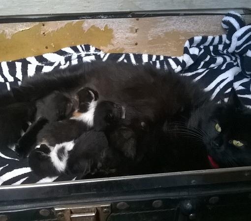 Nero and her kittens