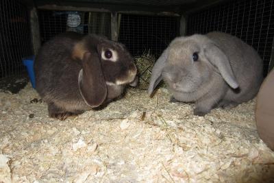 Sooty & Aurora