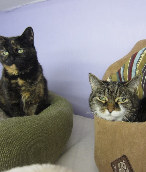 Pippa & Smudge