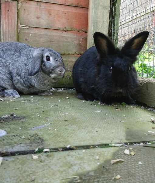 belle & sooty