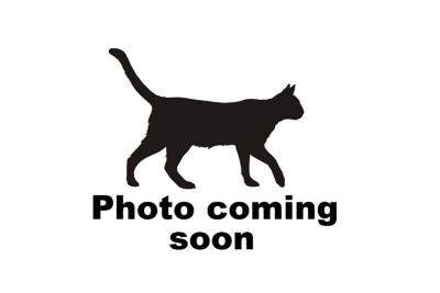 cat coming soon