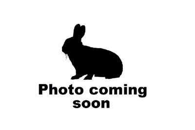 rabbit coming soon