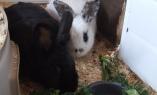 DSCF0933 - Thumper & Robbie (1)
