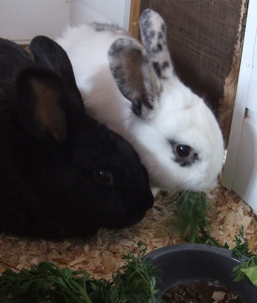 DSCF0935 - Thumper & Robbie