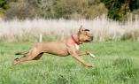 Skye running