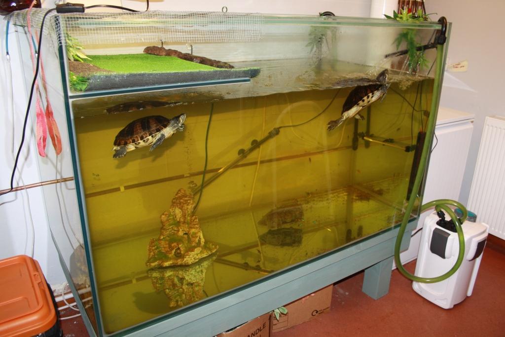 new turtle tank