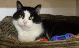 DSC01183 kitty