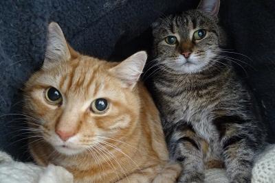 ginger & tabitha