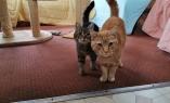 Tabitha & Ginger (2)