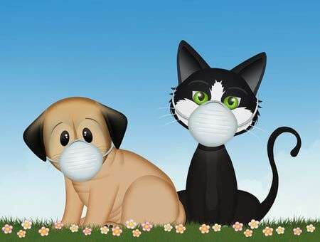 141479838-dog-and-cat-with-coronavirus-mask